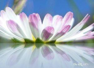 affiche-poster-fleur-miroir-30x40cm-1389538-poster-miroir-petit-8fc8f