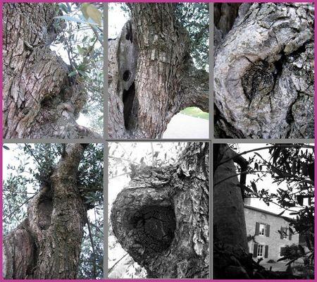 collage_bois_olivier