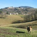 Vollore, château et vache (43)