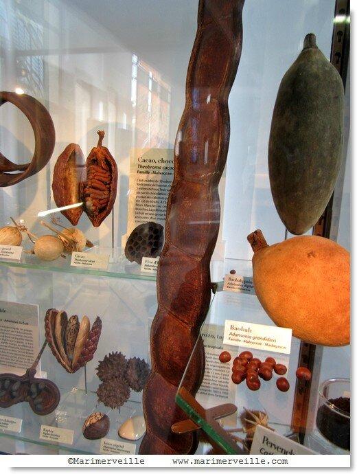 Graines, fruits galerie botanique - Marimerveille