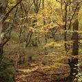 L'automne12