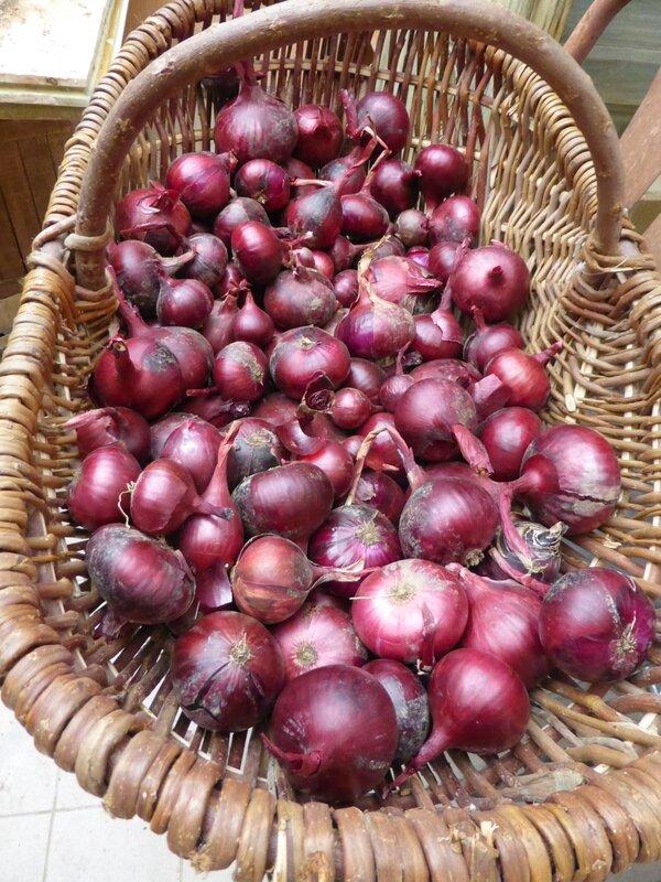 10-oignons rouges (1)