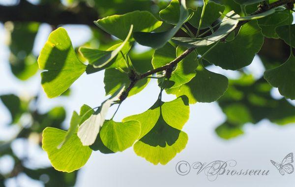arbre-aux-écus13-03