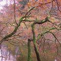 ardennes automne 003