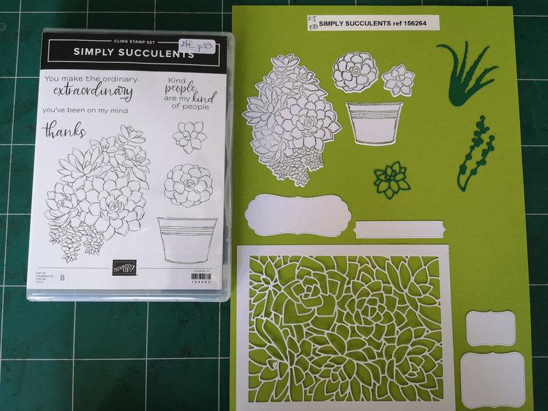 19d Lot Simply succulents