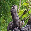loutres zoo de Pessac