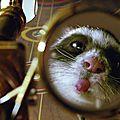 rat-qui-tire-la-langue_jpg_500x630_q95