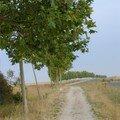 La file d'arbres