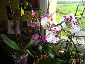orchidées_1029