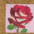 Rose rouge 12*12