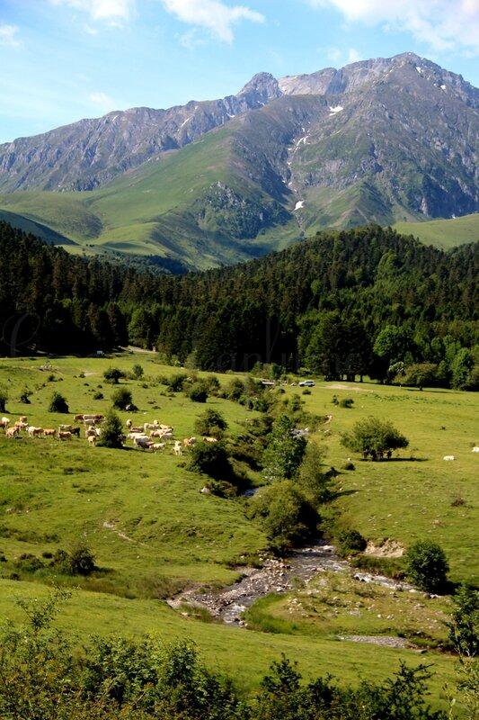 IMG_8286_Hautes-Pyrénées