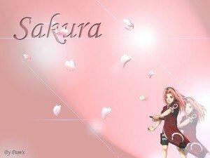 sakura__2_