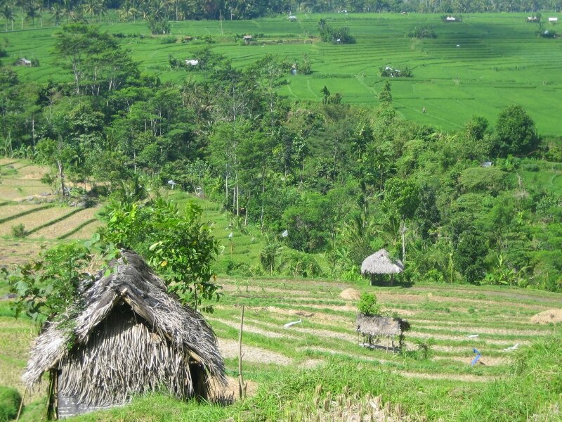Rizières aux alentours de Tirtagangga