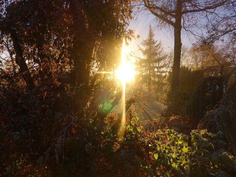 7-soleil et gelée (3)