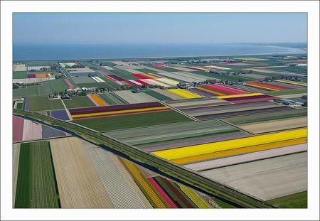 Tulip Fields 5