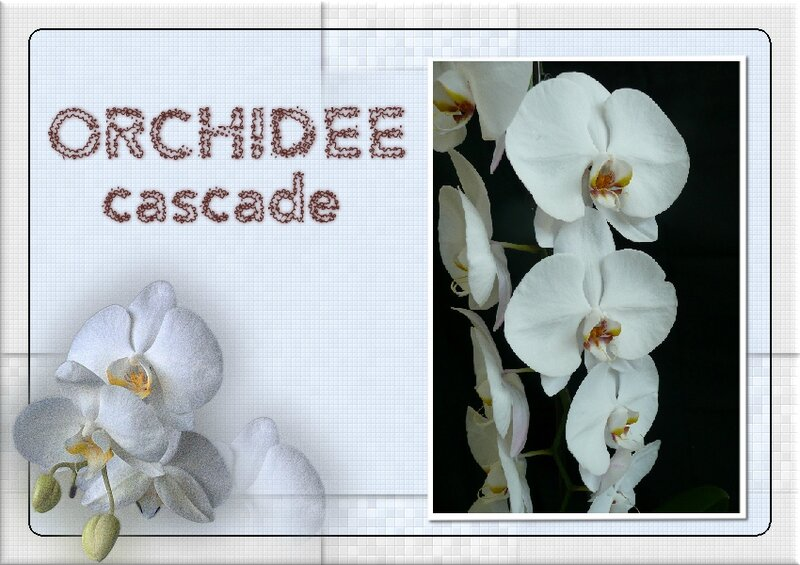Fleurs_orchidée cascade