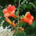Fleurs de Léon 08-07-20169