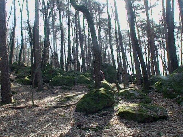 bois de Maintignieux