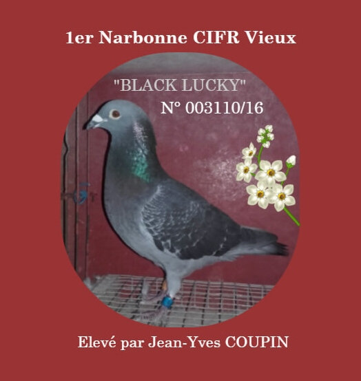 1er Narbonne CIFR Vieux Jean-Yves COUPIN
