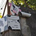 Une boîte aux lettres vache en Alsace…