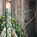 Coeur végétal_7845