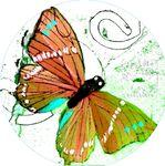 papillonblog