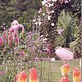 Windows-Live-Writer/jardin_D005/DSCF3715_thumb