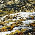 17-10-08 Sortie Montagne et rennes (062)