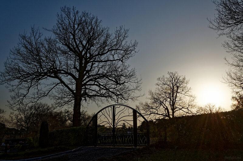 Le portail aux arbres-3