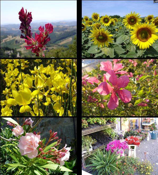 fleurs italie