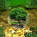 Exercice de psychogénéalogie 01 : construire un premier arbre