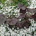 Fleurs 2009 (6)