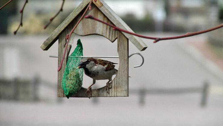 oiseaux de jardin