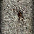 Drôle d'araignée