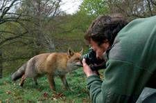 renard_et_camera