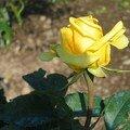 Mes fleurs 051q