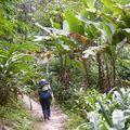 Sentier luxuriant près de Tashiding