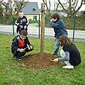 Verger semis autour des arbres avec les cm1.