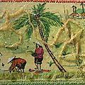 Rizière au Vietnam -002