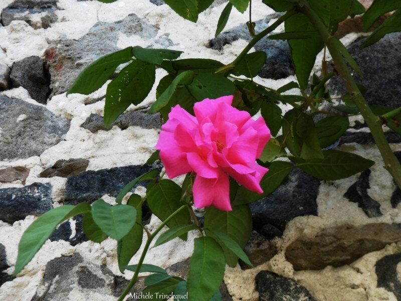 Fleurs de Léon 070718