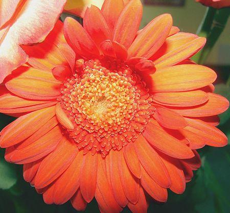 fleur_amelie