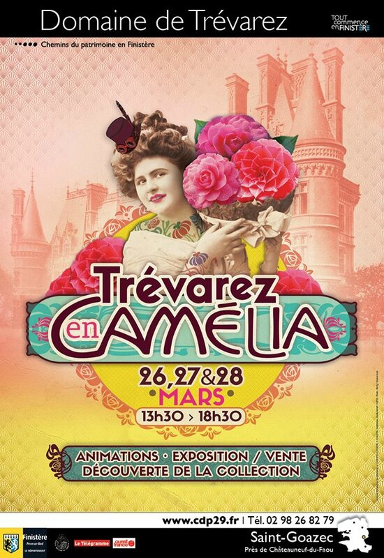 TREVAREZ CAMELLIAS