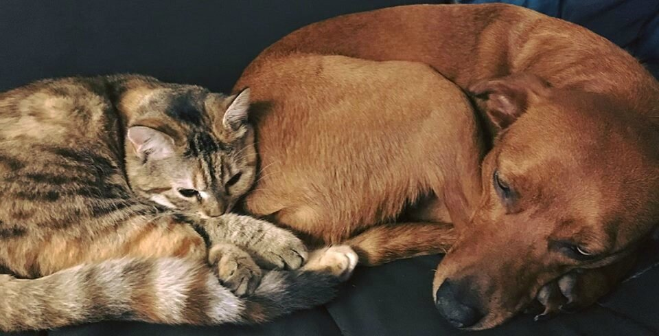 Dayla et la chatte Nala