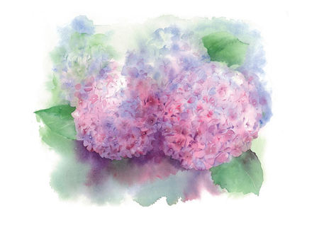 bouquet_hortensias_2
