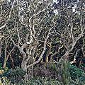 Forêt en transe ! (chênes-lièges à labenne-océan)