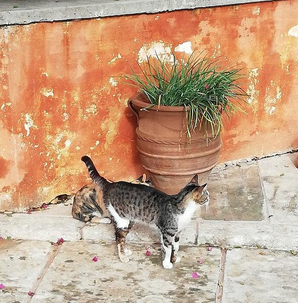 crete chat monastere