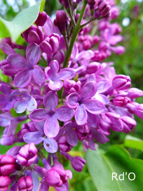 jardin-fleurs-couleurs-2018-blog-01