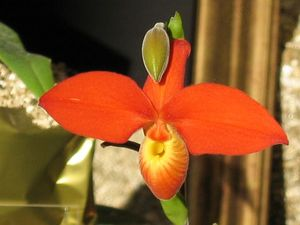 blog_orchid6
