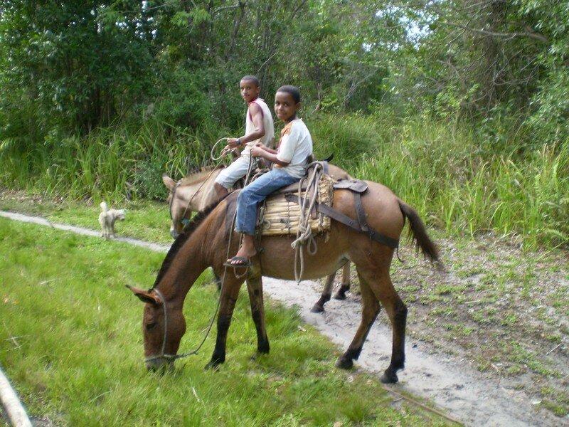 cavaliers dans la mangrove