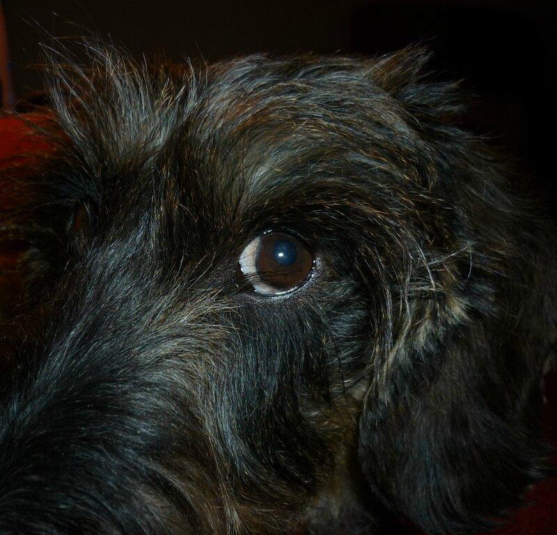 CHARLY (15)
